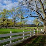 Appleton Farms - White Fence
