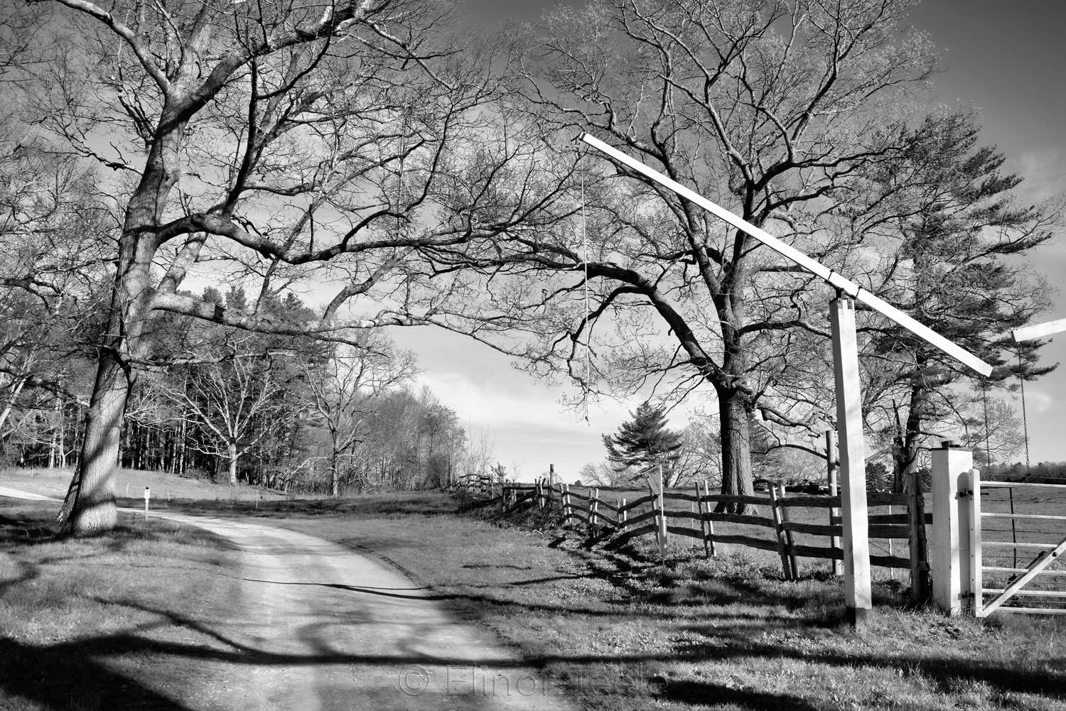 Appleton Farms in Early May B&W 1
