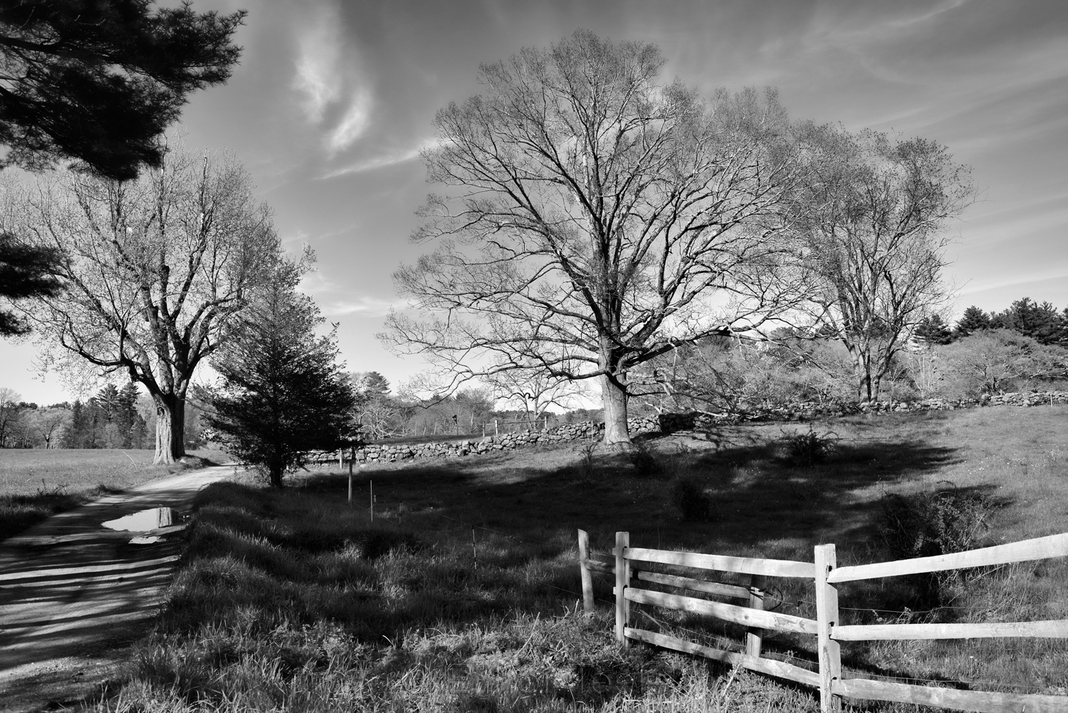 Appleton Farms in Early May B&W 4