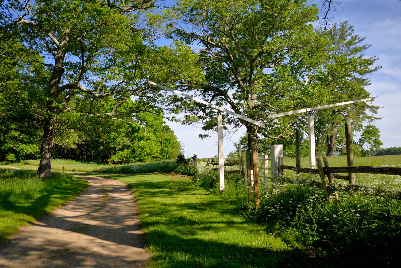 June at Appleton Farms