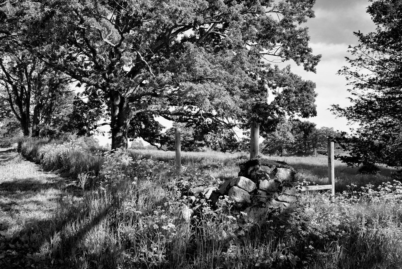 Stone Wall at Appleton Farms (Black & White)