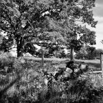 Stone Wall at Appleton Farms (Black & White)