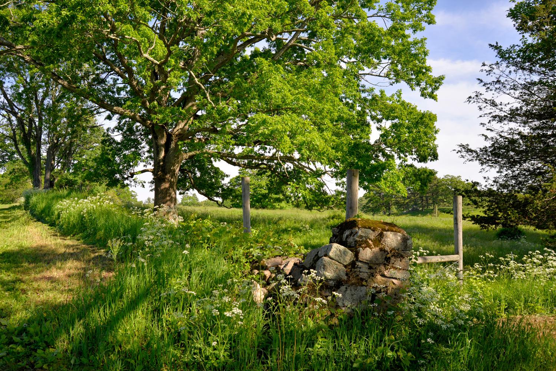 Stone Wall at Appleton Farms
