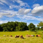 Appleton Farms in August 1