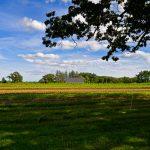 Appleton Farms in August 8