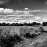 Appleton Farms - August Fields BW
