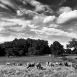 Appleton Farms - Constable Sky BW