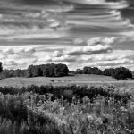 Appleton Farms - Hills & Fields BW