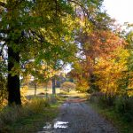 Appleton Farms - Fall Foliage - Lane
