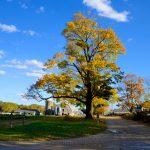 Appleton Farms - Fall Foliage - Blue Skies
