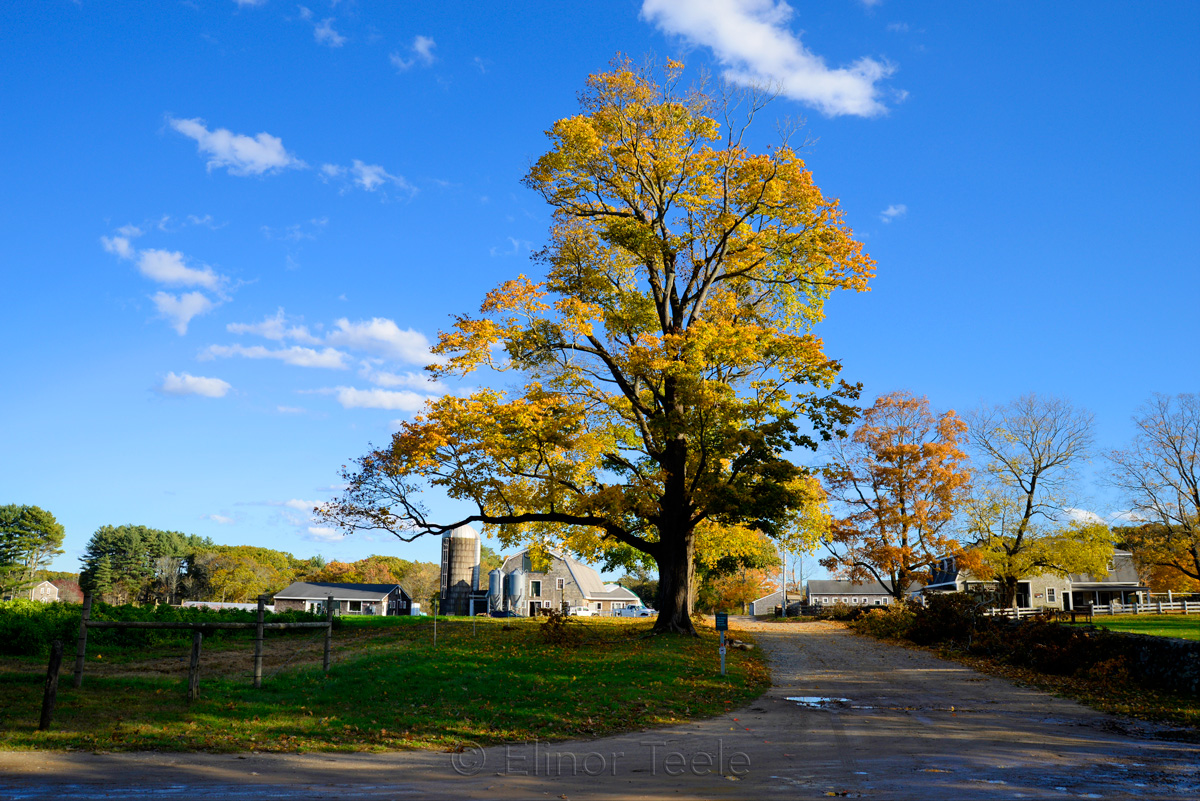 Appleton Farms - Fall Foliage - Blue Skies