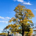 Appleton Farms - Fall Foliage - Milking Barn