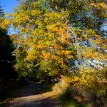 Appleton Farms - Fall Foliage - Orange & Blue
