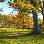 Appleton Farms - Fall Foliage - Tree & Pasture