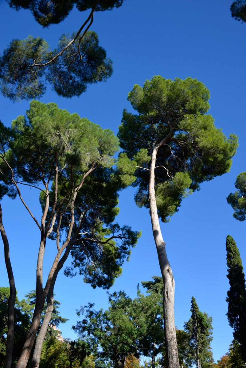 Trees in the Buen Retiro