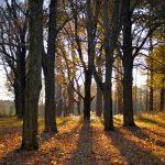 Appleton Farms in the November Golden Hour 1