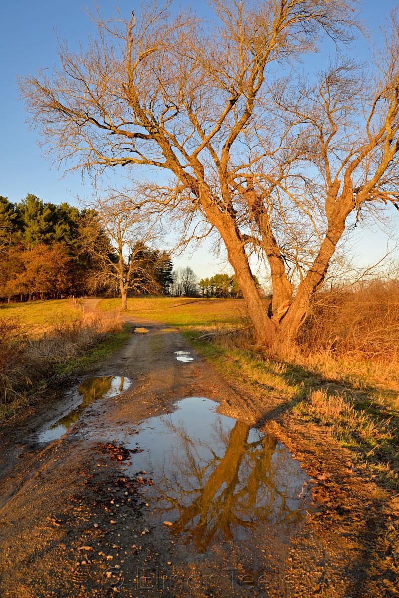 Appleton Farms in the November Golden Hour 2