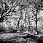 Appleton Farms - Leafless Trees 2