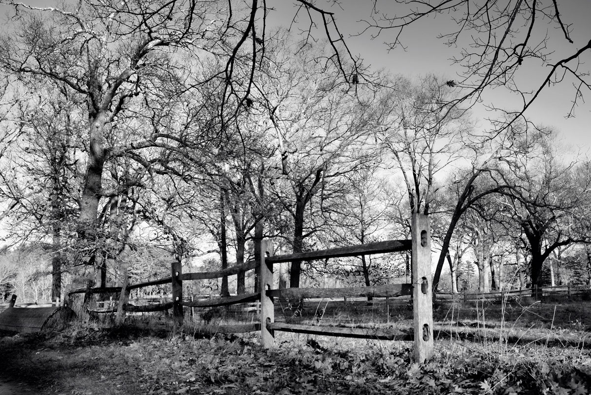 Appleton Farms - Leafless Trees 3