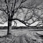 Appleton Farms - Leafless Trees 4