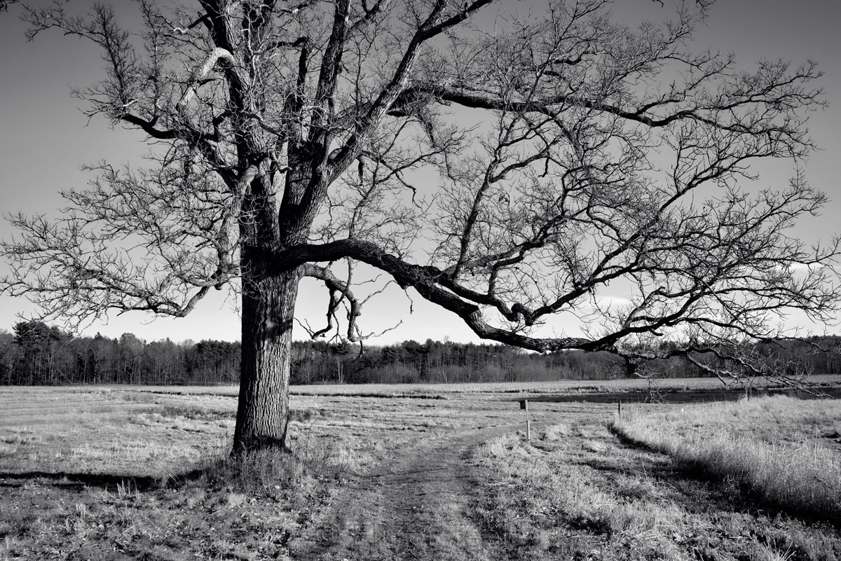 Appleton Farms - Leafless Trees 4
