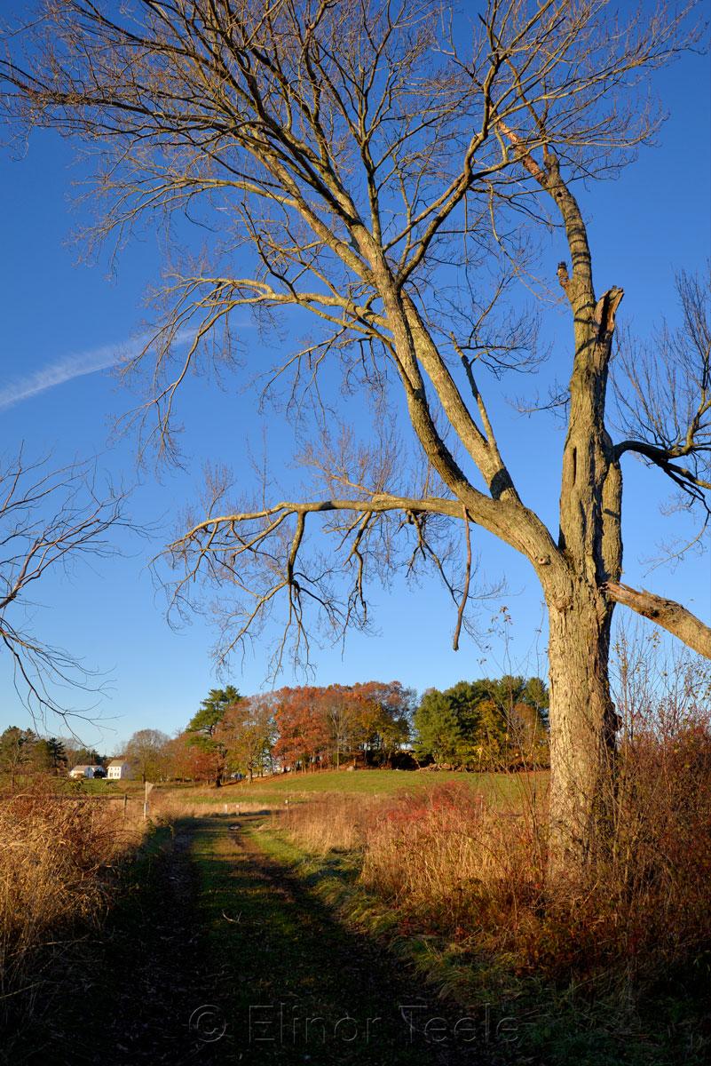 Appleton Farms - November Afternoon 7