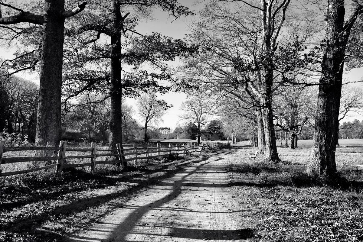 Appleton Farms - November Afternoon - Black & White 1