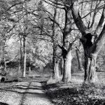 Appleton Farms - November Afternoon - Black & White 2