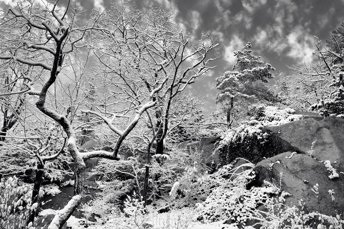 December Frosting - Black & White 1