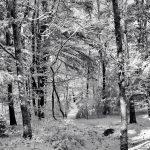 December Frosting - Black & White 2