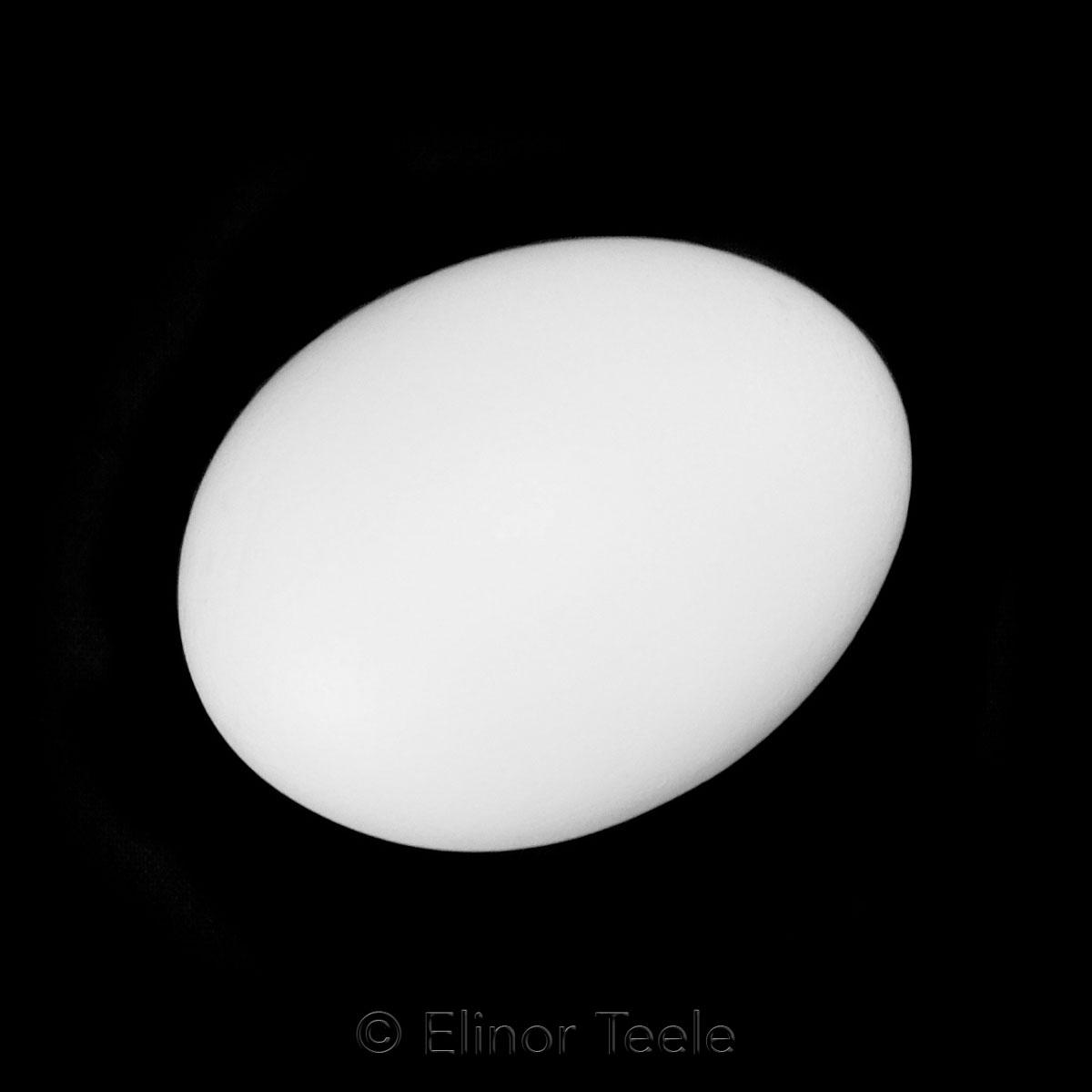 Egg - Black & White