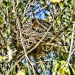 Bird Nest - Abstract