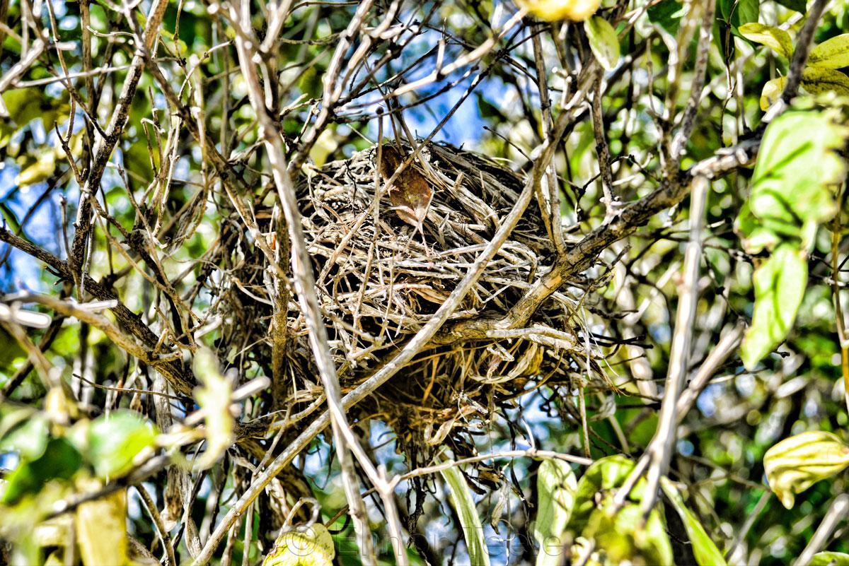 Bird Nest - Abstract