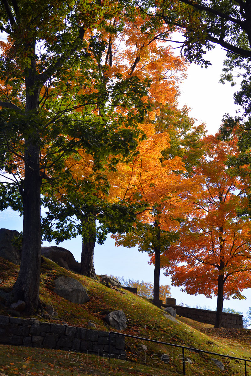 Cemetery - Fall Foliage in October 6