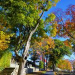 Fall Foliage - Cemetery in the Afternoon 1