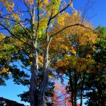 Fall Foliage - Cemetery in the Afternoon 2