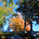 Fall Foliage - Cemetery in the Afternoon 3