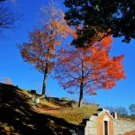 Fall Foliage - Cemetery in the Afternoon 5
