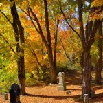 Fall Foliage - Cemetery in the Afternoon 6