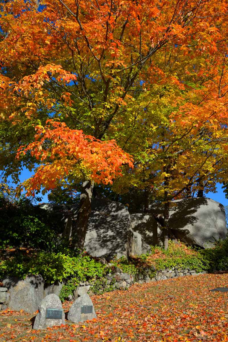 Fall Foliage - Cemetery in the Afternoon 8
