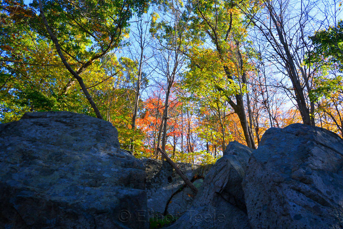 Fall Foliage - Granite & Trees