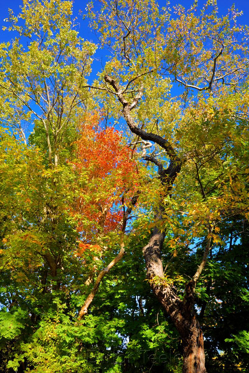 Fall Folliage - Green, Yellow & Red Trees