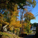 Fall Foliage - Nashua Avenue 1