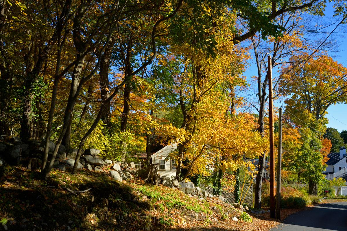 Fall Foliage - Nashua Avenue 2