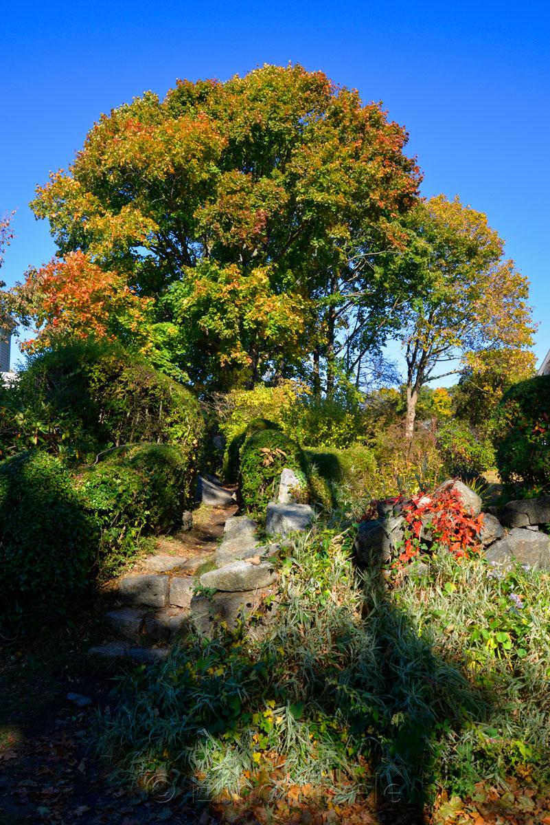 Fall Foliage - Tree & Path