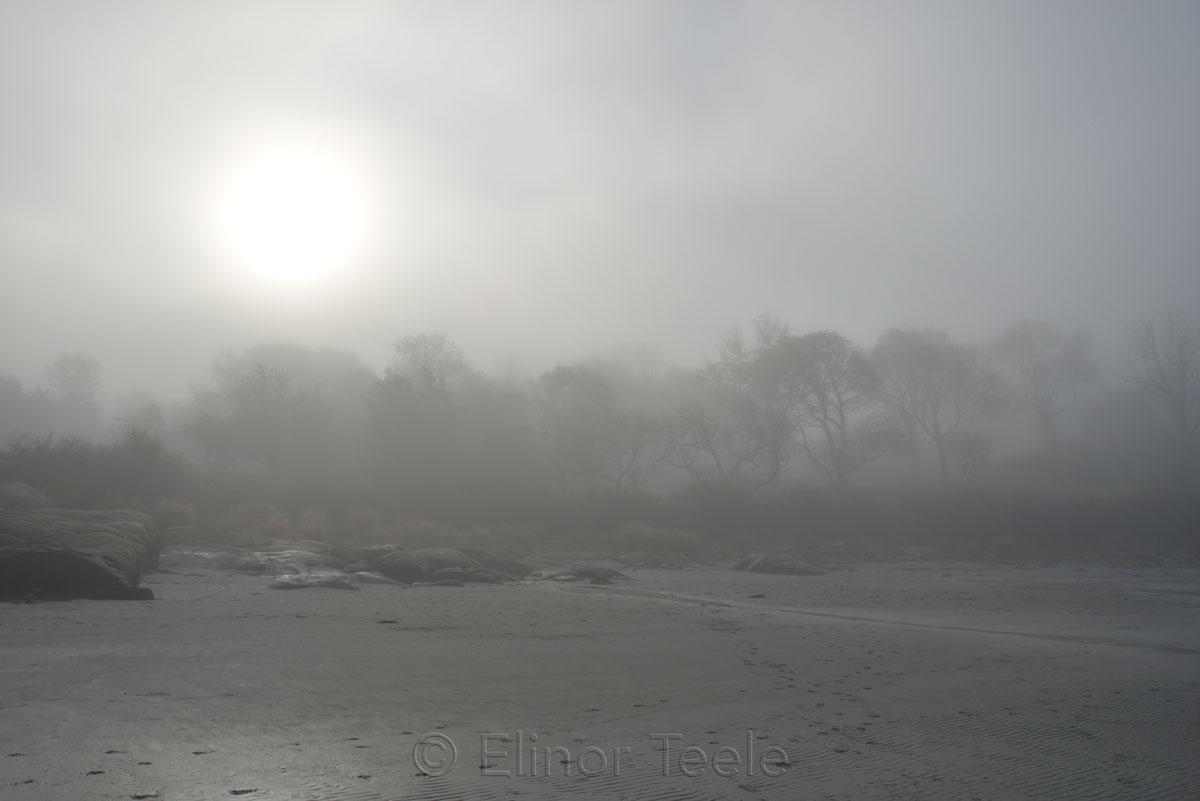 Beach - November Fog 1