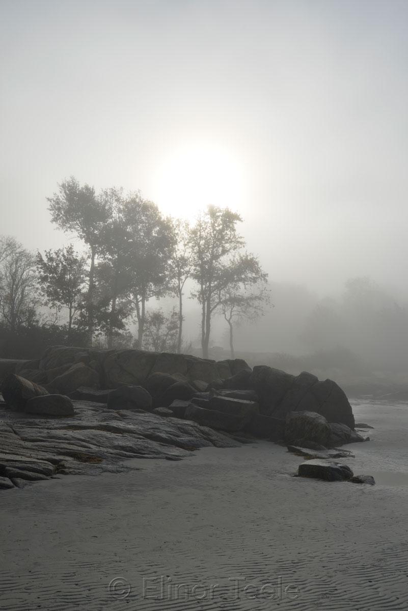 Beach - November Fog 2