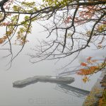 Fall Foliage & Dock - November Fog