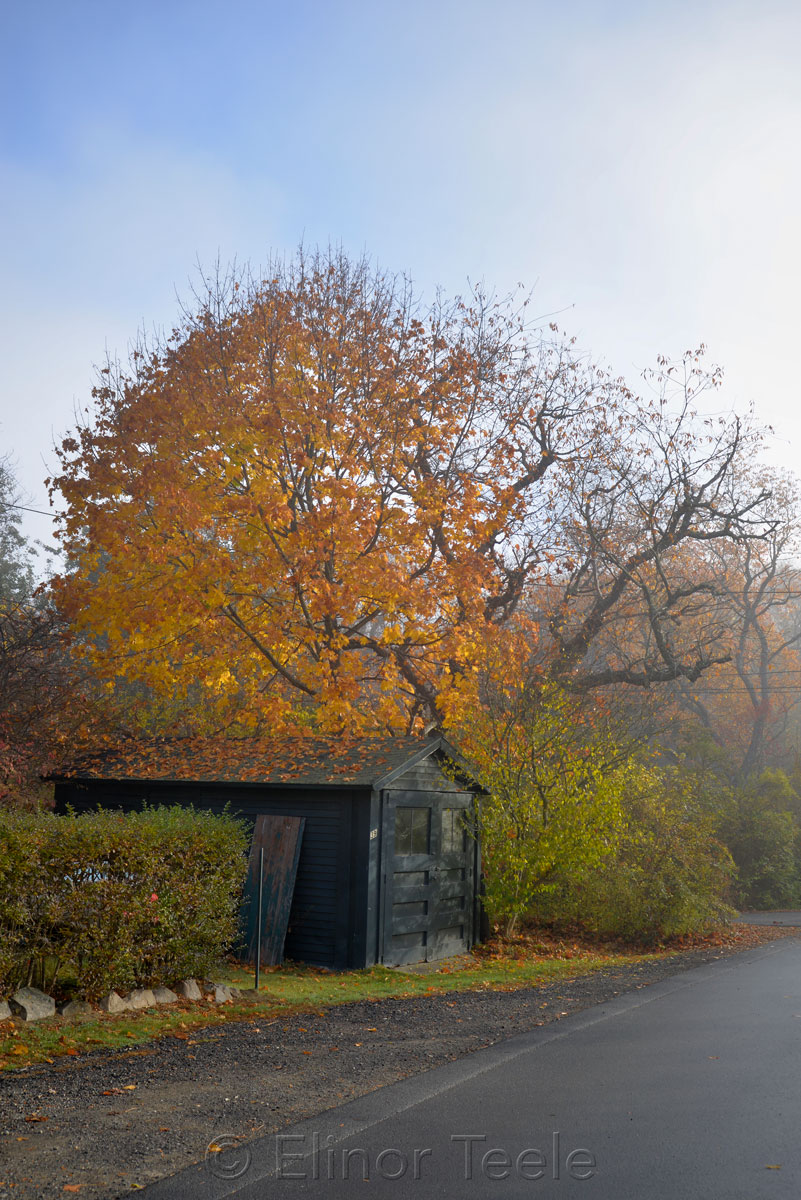 Shed & Tree - November Fog