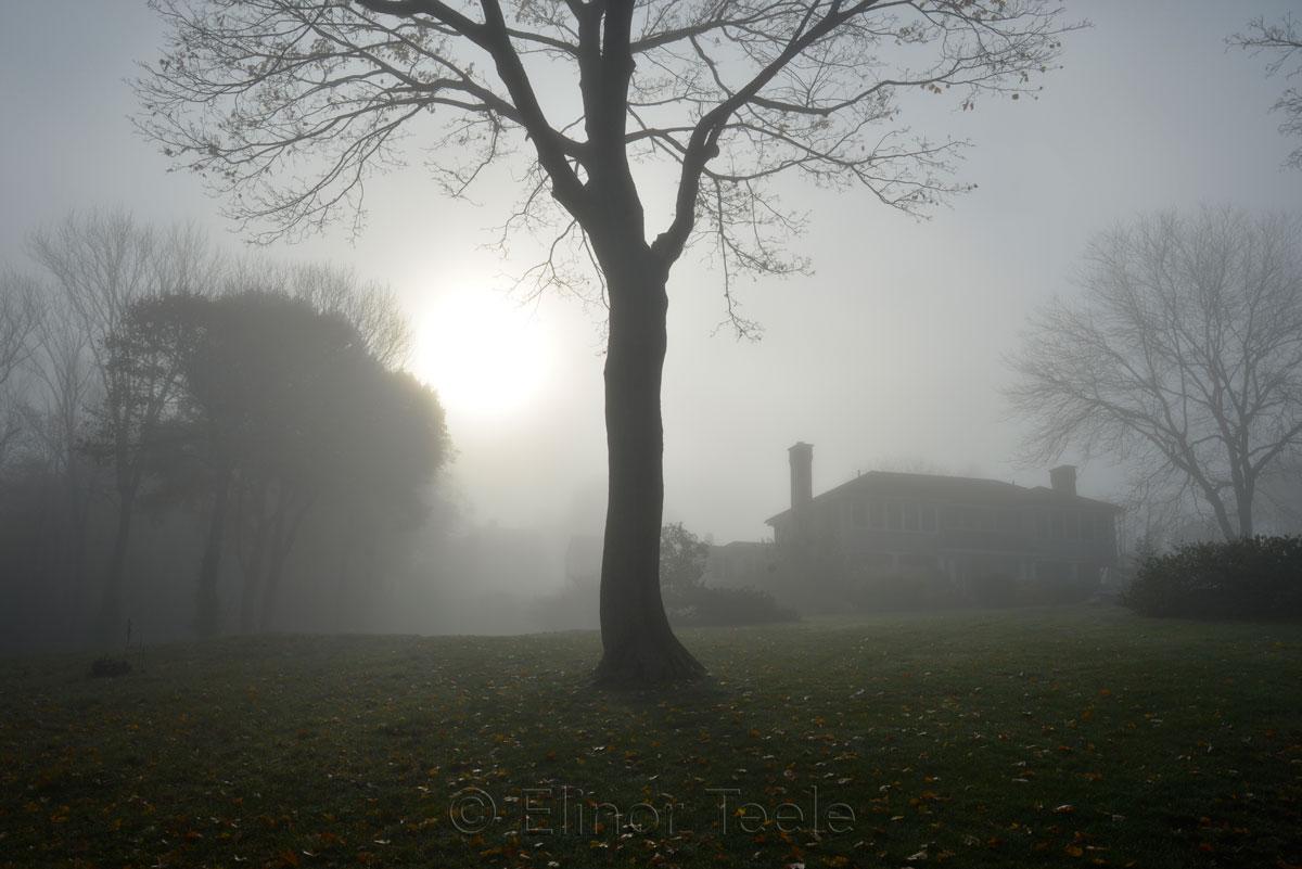 Pasture - November Fog 1